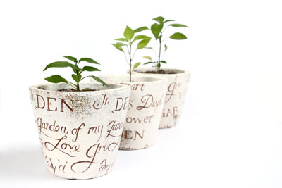 Chilipflanzen müssen Sie regelmäßig umtopfen