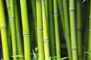 Bambus ist ein wichtiges Material im japanischen Garten