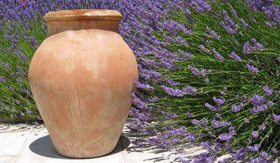 Typische Pflanze für den Mittelmeerraum: der Lavendel