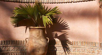 Zu einer mediterranen Terrasse passen natürlich Palmen