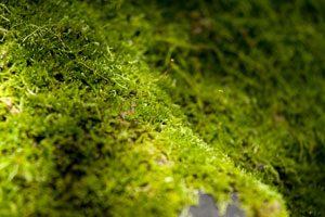 Moos ist ein essentielles Element in der Gartengestaltung