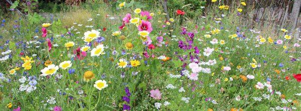 Naturgarten anlegen und pflegen