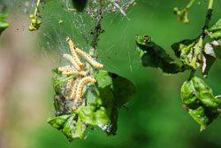 Schädlinge kommen nicht in jedem Garten gleichermaßen vor