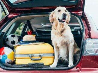 hund stress autofahren tipps