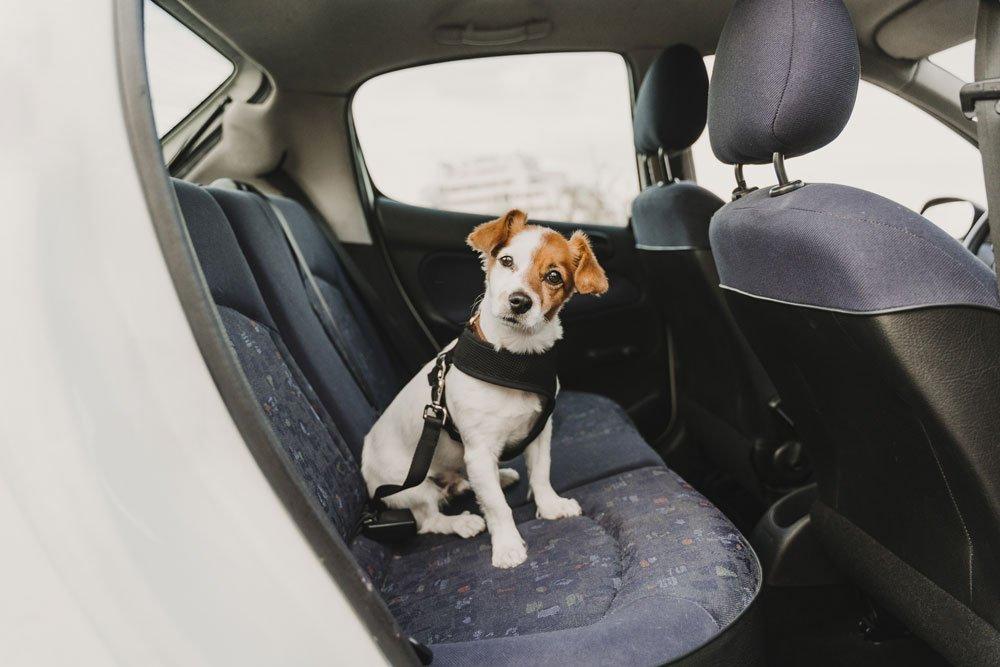 hund autofahren stress tipps