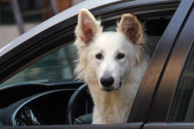 Lassen Sie Ihr Haustier nicht im Auto zurück