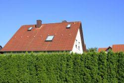 Hecke als Sichtschutz – Die besten Pflanzen und Pflegetipps