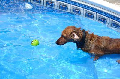 Locken Sie Ihren Hund ins Wasser