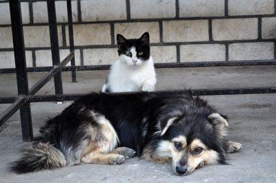 Locken Sie Ihre Haustiere in den Schatten