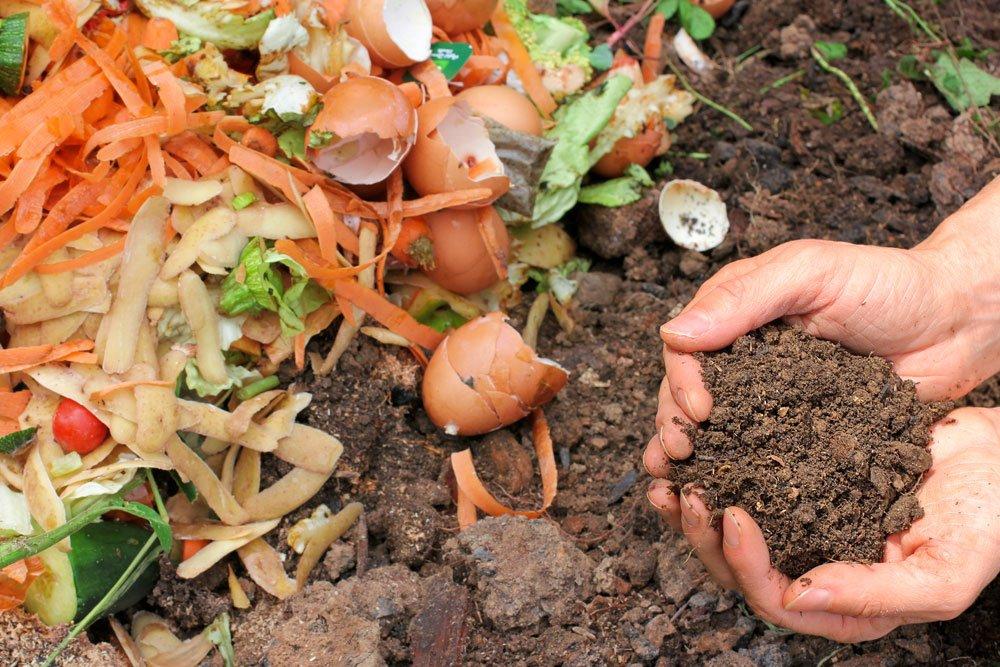 kompost abfälle erlaubt tipps
