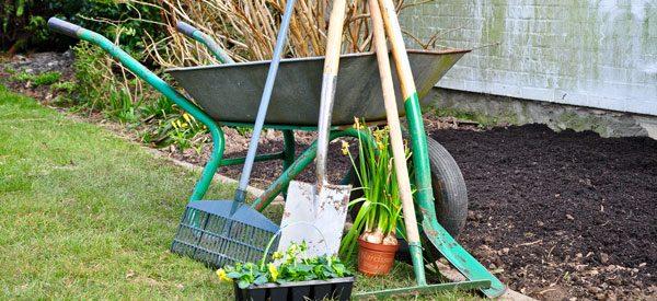 Gartenarbeit im Juli – Das sollten Sie erledigen