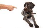 Hund Verachtung