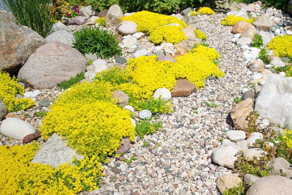 kiesgarten tipps pflanzen anleitung