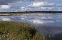 Vogelschutzgebiet Hvide Sande