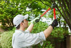 Gartenarbeit Juni Baum beschneiden