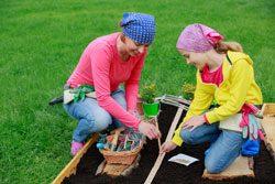 Gartenarbeit Juni Gemüse pflanzen