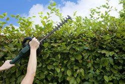 Gartenarbeit Juni Hecke schneiden