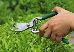 Gartenarbeit Juni Stecklinge setzen