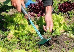 Gartenarbeit Juni Unkraut beseitigen