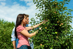 Nutzgarten anlegen Obstbaum Säule