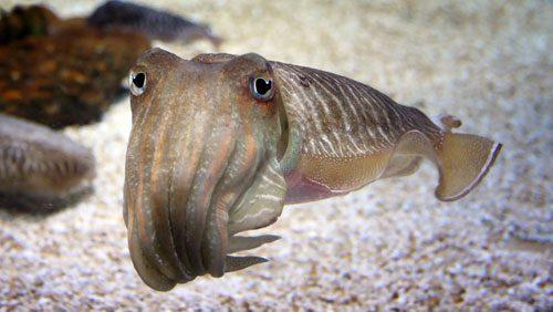 Sehenswürdigkeiten Barcelona Aquarium