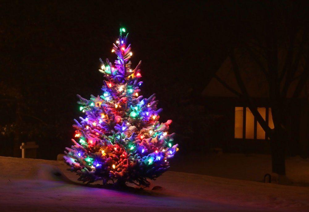 Weihnachtsbaum angestrahlt Garten Deko