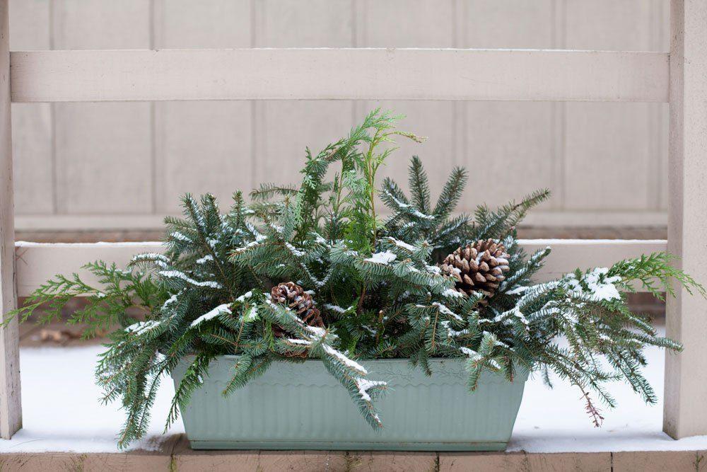 Weihnachtsdeko draußen Tannengrün Blumentopf