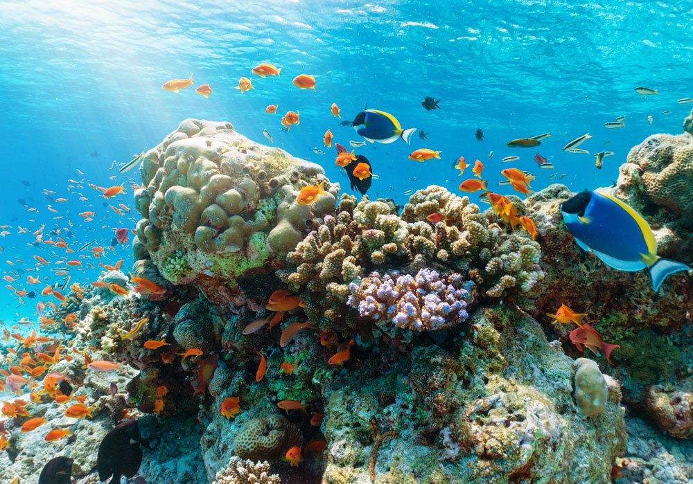 urlaub malediven korallenriff tipps