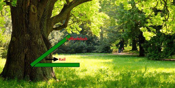 Baum fällen Anleitung Fallkerbdach