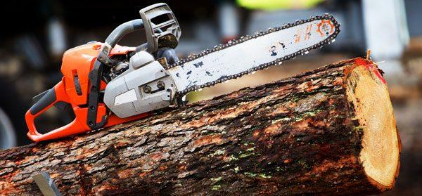 Baum fällen Anleitung
