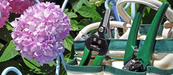 Hortensien schneiden – So machen Sie es richtig