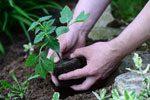 Pflanzen im Garten einsetzen