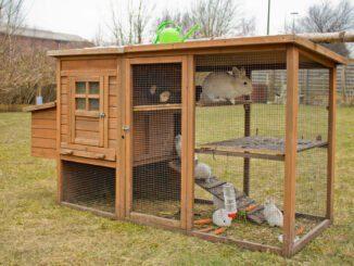 Kaninchen Haltung Stall artgerecht