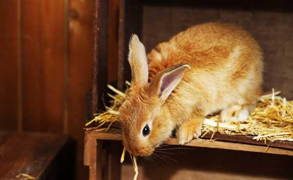 Kaninchen artgerecht halten: Anforderungen an den Kaninchenstall