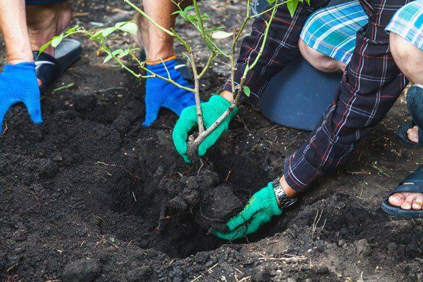 Stauden teilen & Rosen pflanzen – diese Gartenarbeiten müssen Sie im Herbst noch erledigen